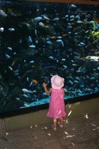 The Toronto Zoo, fish, toddler