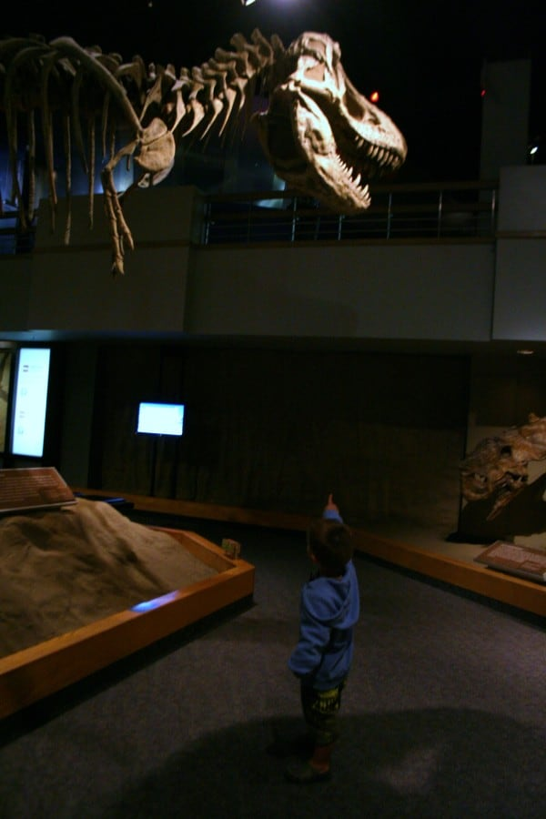 drumheller museum, drumheller alberta, drumheller, dinosaur museum, royal tyrrell museum, trex, skeleton