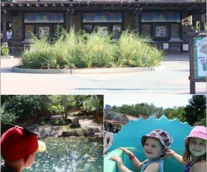 animal kingdom for toddlers, animal kingdom with a toddler, animal kingdom with a baby, animal kingdom with babies